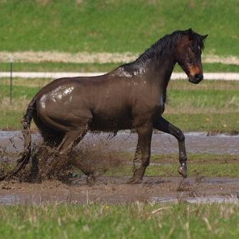 Dirty Horse